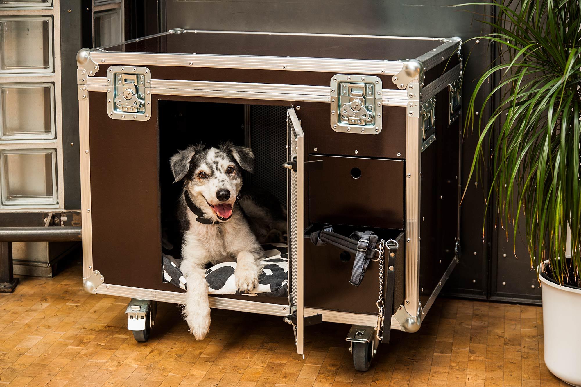 dogcase.de -- Hundehütte mal anders